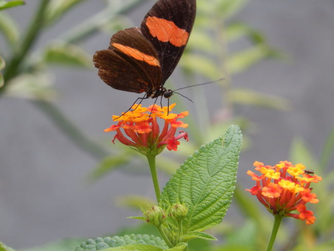 Amazon River Amazonas Butterfly Garden Butterfly ❤ Flowers,Plants & Garden Fly Red Amazon Amazon Rainforest Amazonia Black Blossom Butterflies Butterfly Butterfly - Insect Butterfly Collection Butterfly On Flower Butterfly Wings Cold Temperature Flower Flower Head Flowers Insect Petal Yellow