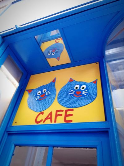 Prague Blue Yelloow Cat Coffee Cafe Communication Guidance Text Yellow Close-up