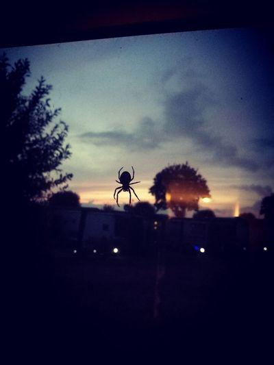 evening guest Camperlife Camper Netherlands Spider HUAWEI Photo Award: After Dark Sunset Silhouette Dusk Sky Cloud - Sky