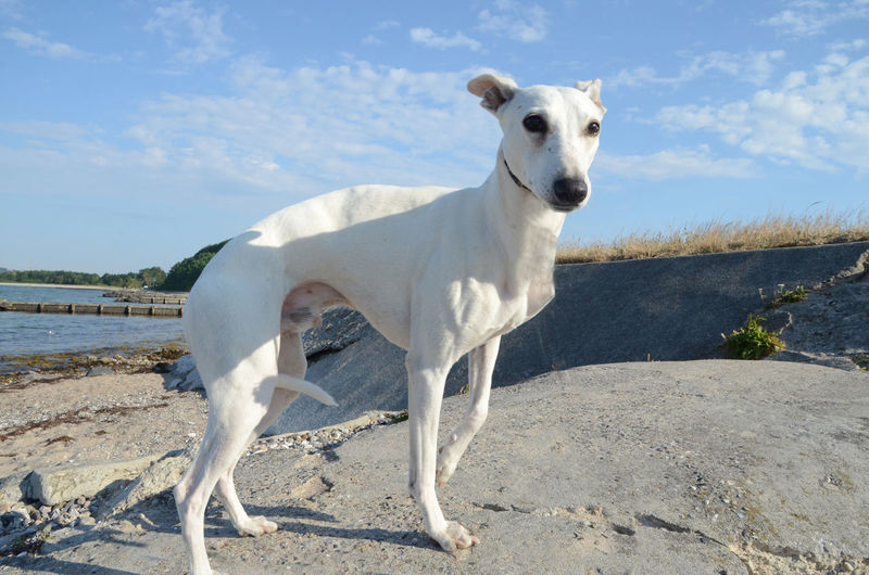 Portrait of dog standing on shore