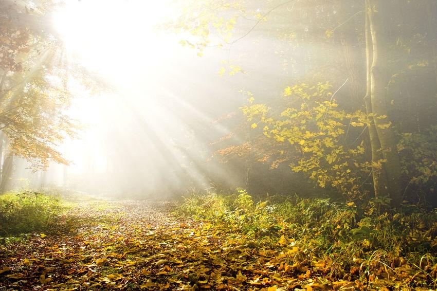 Sunbeam Trees Autumn Autumn Colors Autumn Leaves