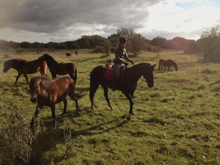 Horseriding Wildhorses Summertime Sunlight Relaxing Enjoying Life