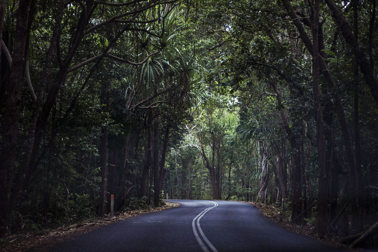 The winding road through the Daintree rainforest in Australia. Australia Beauty In Nature Daintree Rainforest Day Diminishing Perspective Direction Dividing Line Empty Empty Road Forest Growth Nature No People Outdoors Plant Rainforest Road Road Marking Roadtrip The Way Forward Tranquility Transportation Tree