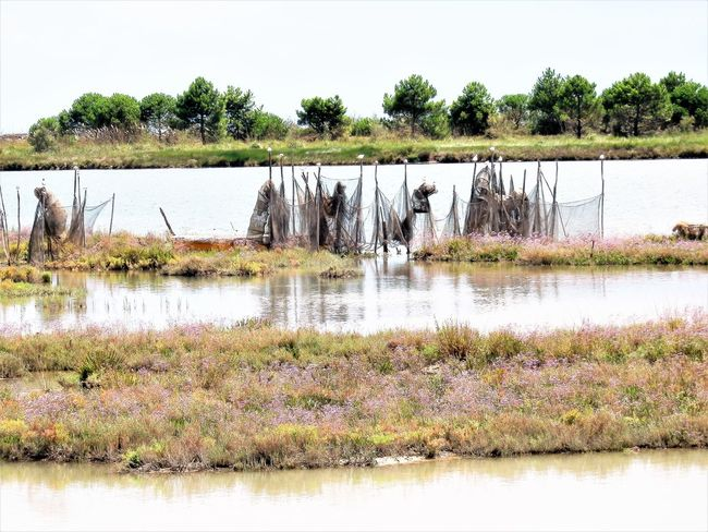 Eraclea Italy Nature Reserve Animal Themes Beauty In Nature Day Fishnets Flowers Growth Lake Landscape Mort's Lagoon Nature No People Outdoors Plant Scenics Sky Tranquility Tree Water