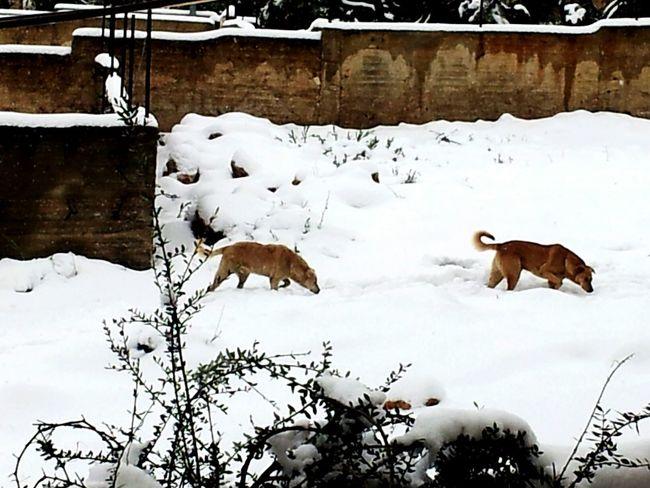 فلسطين تلج Snow ❄ Photographypho Jerusalem Palestine