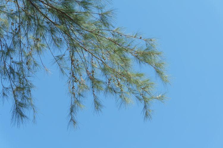 Arbor Arbour