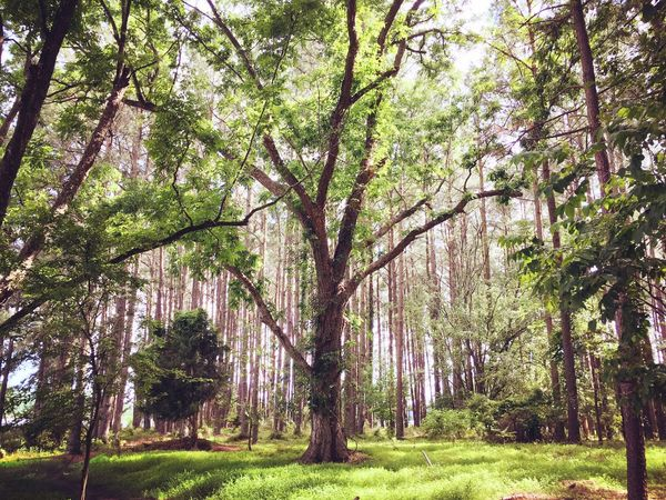 Afternoon hike@Harris Lake County Park Optoutside DeLeonStrong