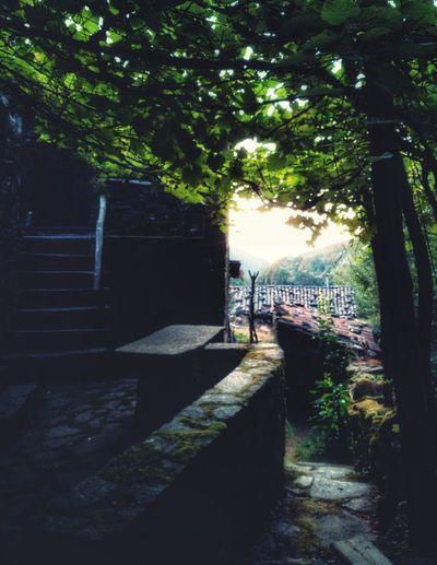 Candal - Aldeias de xisto Aldeias Do Xisto EyeEmNewHere Village Lousã Tree Men Full Length Walking Sky
