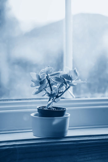 Close-up of potted plant on window sill