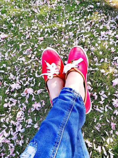 REST your tired feet on Cherry blossoms. Close your eyes and dream. Life is beautiful. Indeed!