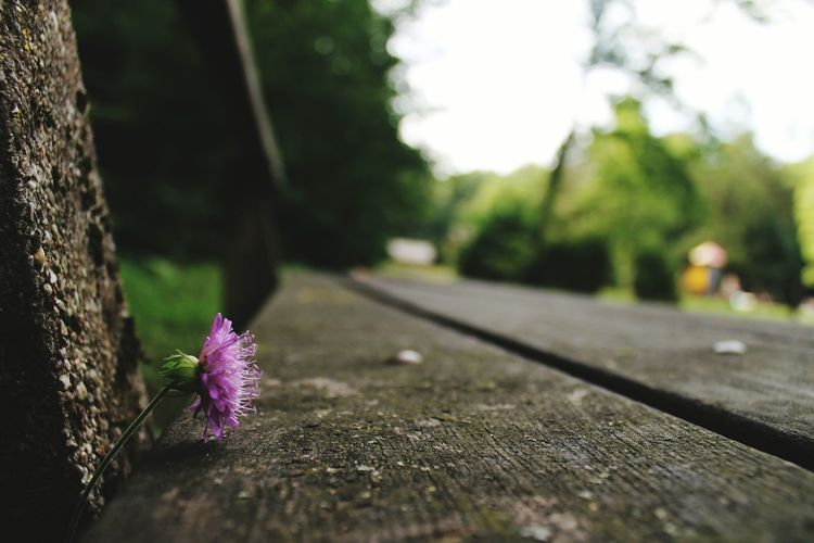 Purple flower on wooden bench at park