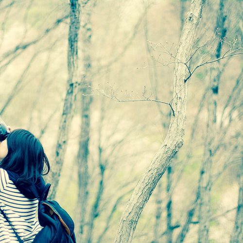 自然 散歩 Nature 妙見山 妙見の森 Sony α700 Woods Lightroom