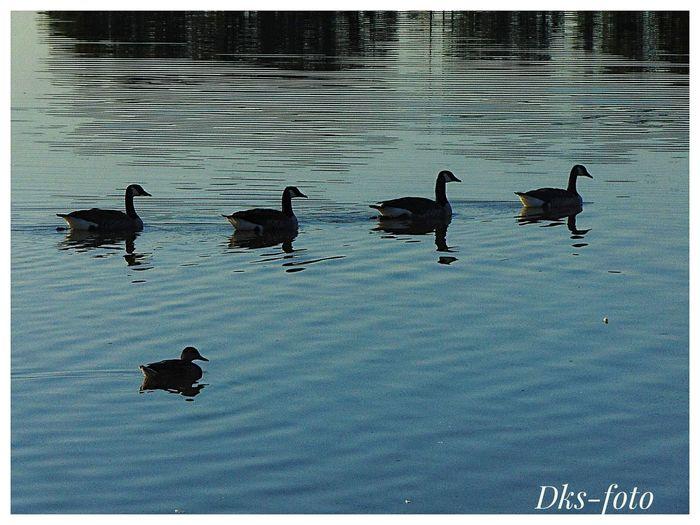 birds, siluette