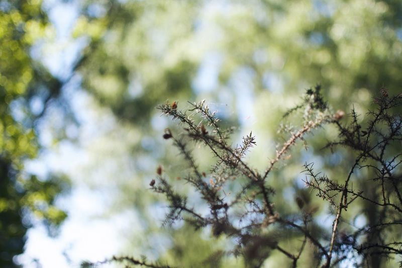 Plant Growth Tree Beauty In Nature Low Angle View Focus On Foreground Day Tranquility Branch Flowering Plant Fragility Nature No People Sky Flower Vulnerability  Selective Focus Close-up Outdoors Freshness