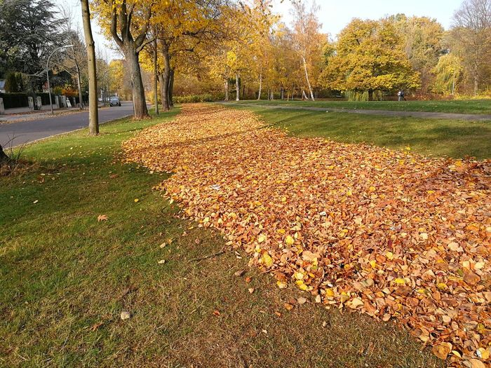 Carpet Mobilephotography Colors Tree Autumn Park - Man Made Space Sky Grass Fall Leaves Fallen Leaf Dry