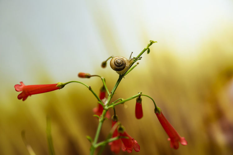 snail crawling Shell Snail Slow Red Flower Garden Botany Nature Flower Head Close-up Bokeh Leaf Red Full Length Close-up Animal Themes Plant Green Color Blooming Plant Life Blossom Mollusk Slug