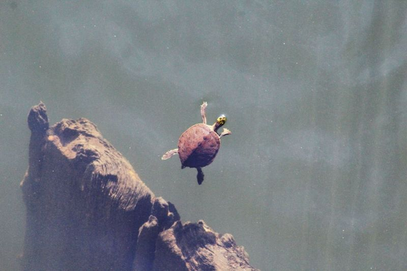 -See You- Nature_collection Turtle Exploring New Ground OpenEdit Water Nature Broken Animals Animal_collection