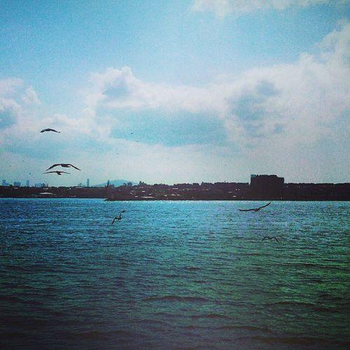 Istanbul Mavi Gok Deniz martılar bulutlar