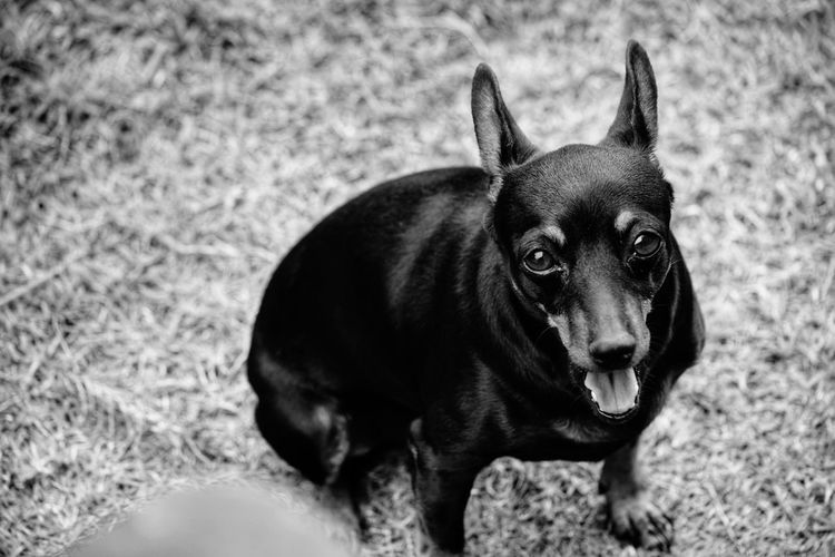 Portrait of dog looking away on field