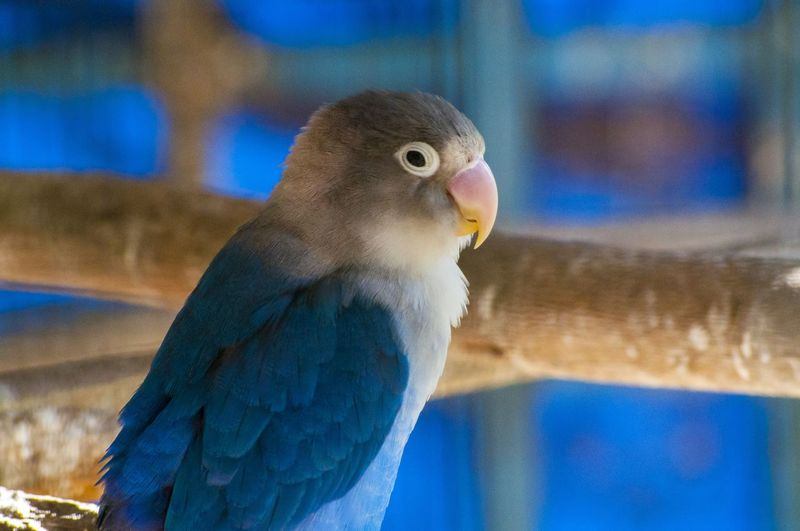 Animal Themes Bird Zoology Wildlife Nature Close-up Beauty In Nature Blue
