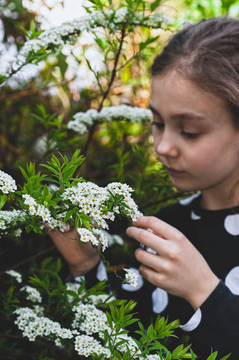 Young girl admiring tiny white spring flowers known as bridal wreath. blooming spiraea in garden.