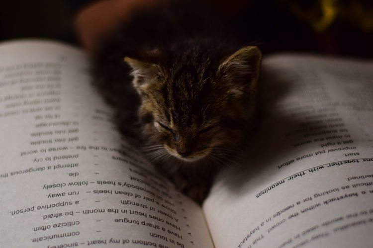 Bookworm Kitten series: 1 Cats Of EyeEm Kittens Animal Animal Themes Book Cat Cats Close-up Domestic Domestic Animals Domestic Cat Feline Indoors  Kitten Kittens Of Eyeem Mammal Open Page Paper Pets Publication Selective Focus Studying Text Whisker