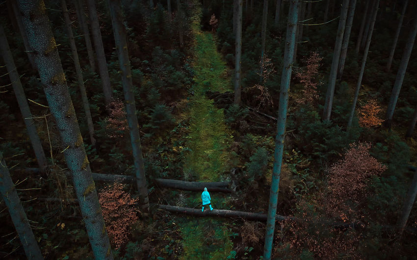High angle view of woman standing on log amidst trees in forest