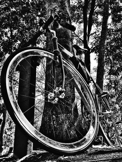 Track Bike Fixieporn Black And White Chrome