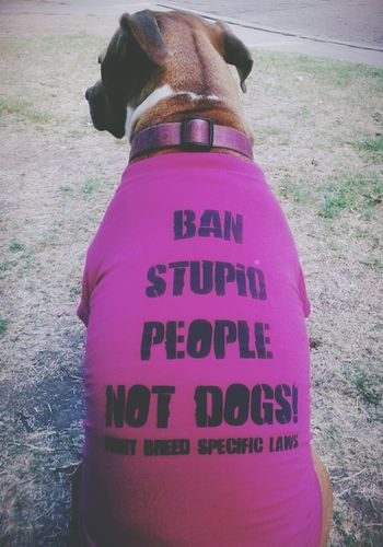 Freedom of Speech Stop Breed Discrimination Pitbull♥ Rescuedog My Heart ♡