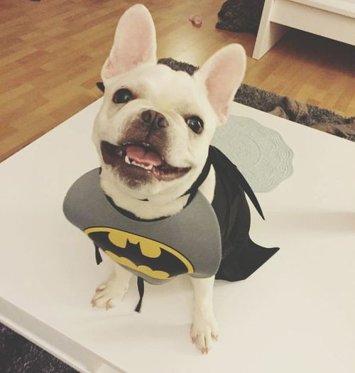 Batman Nananananananana BATMAN <3 😍🐶