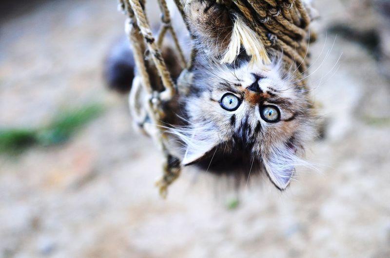 Animal Themes Persian Cat  Cat Lovers Cats Of EyeEm Cats 🐱 Cat Kitten Kitten 🐱 Animal Eye Portrait Looking At Camera Close-up Yellow Eyes HEAD