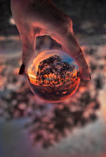 Close-up of hand holding crystal ball against tree during sunset