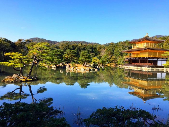 Travel Traveling World Kyoto Japan Kinkakuji Kinkakuji Temple Temple Shrine Golden Gold Beautiful Beautiful Nature Architecture Must Must See Bling Golden Temple Landscapes With WhiteWall Ultimate Japan