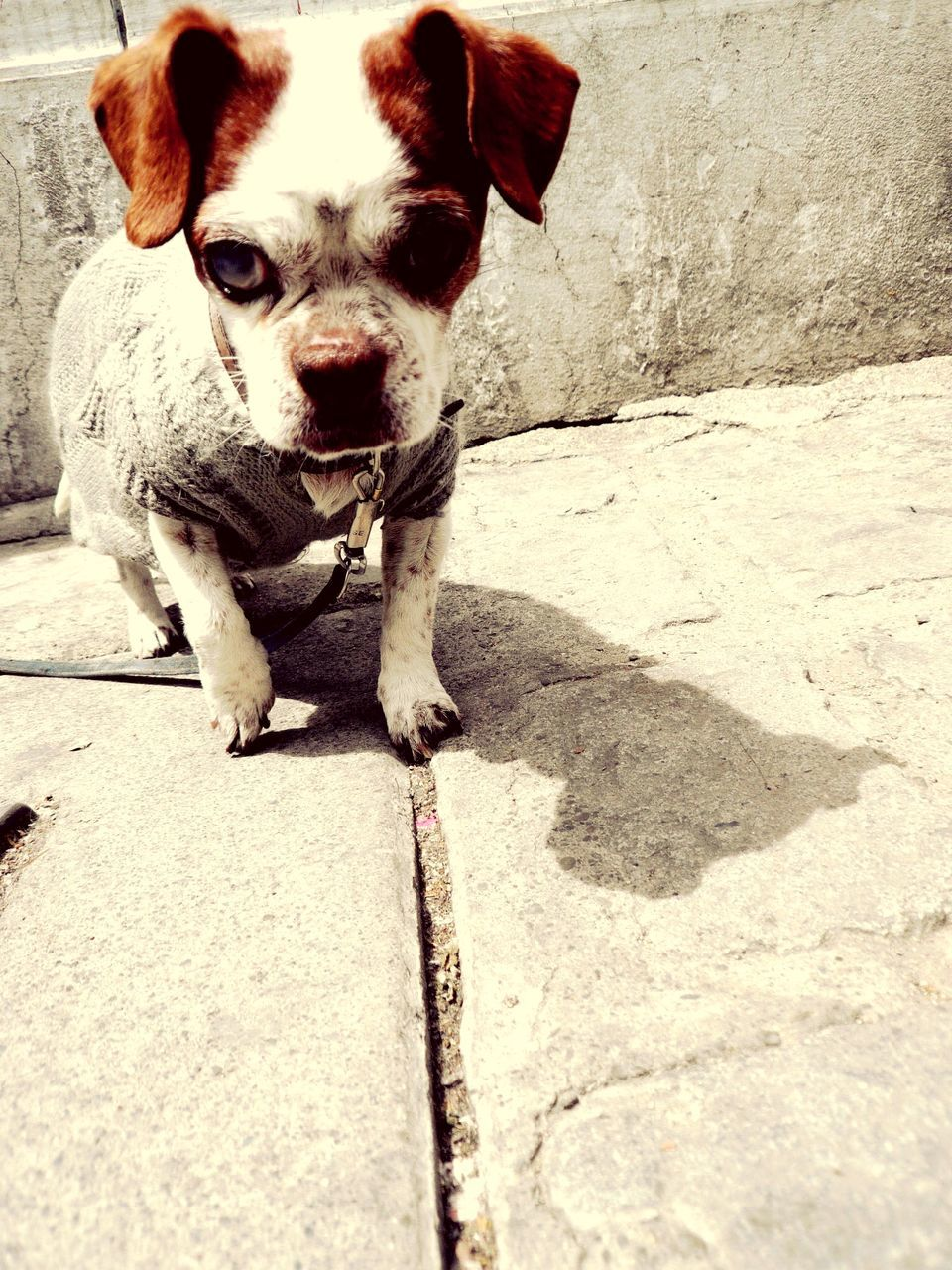 Portrait Of Dog Standing On Street
