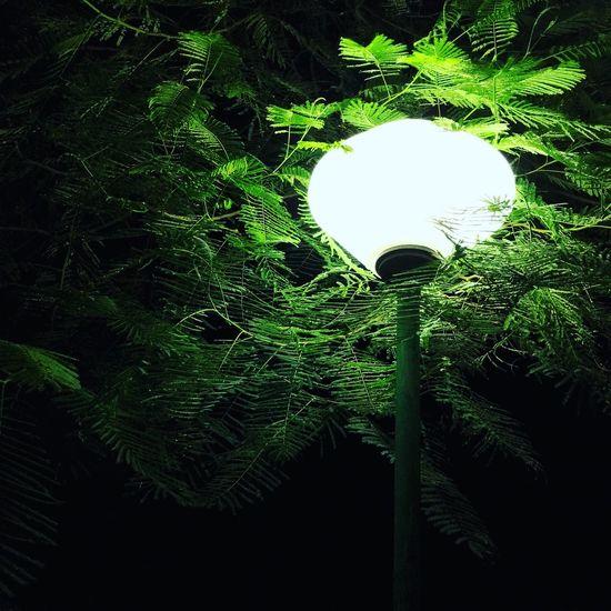Fighting Darkness Lamp Lamp Post Lamppost Night Nightphotography Night Lights Night Photography Park Outdoors Nightlights