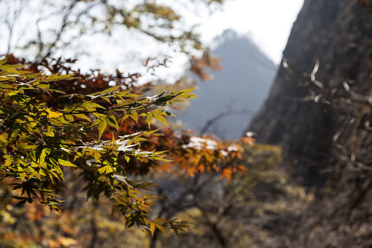 autumn in Maisan Mountain, Jeonju, Jeonbuk, South Korea Autumn Autumn Autumn Colors Beauty In Nature Branch Close-up Day Fall Growth Leaf Maisan Mountain Nature No People Outdoors Tree