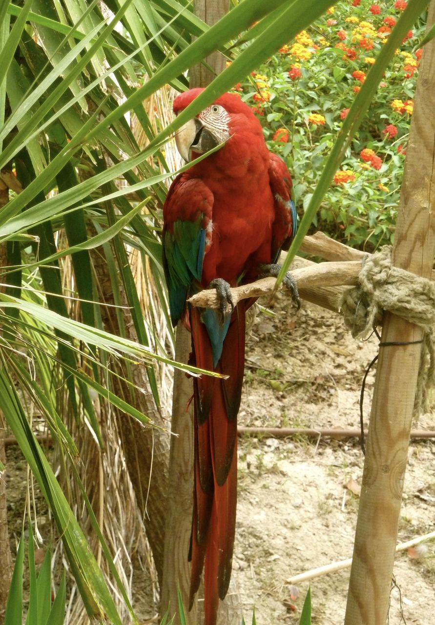 Macaw Perching On Wood