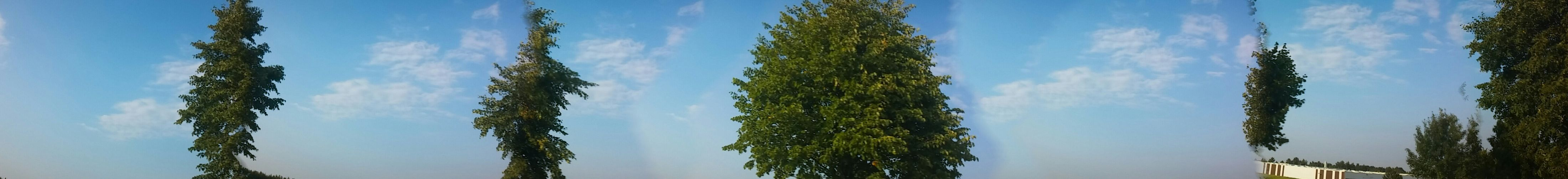 Panorama Trees