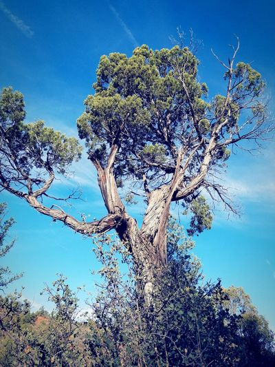 #trees Underwater Sky Water Low Angle View Close-up Blue Day