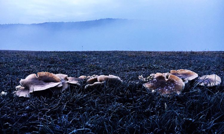 Mashrooms Fungus Sky Nature Day No People Cold Temperature Outdoors Cloud - Sky Land Creative Space The Creative - 2018 EyeEm Awards The Great Outdoors - 2018 EyeEm Awards The Still Life Photographer - 2018 EyeEm Awards