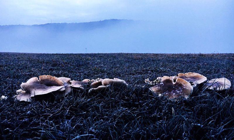 Mashrooms Fungus Sky Nature Day No People Cold Temperature Outdoors Cloud - Sky Land Creative Space The Creative - 2018 EyeEm Awards The Great Outdoors - 2018 EyeEm Awards The Still Life Photographer - 2018 EyeEm Awards This Is Strength Autumn Mood It's About The Journey