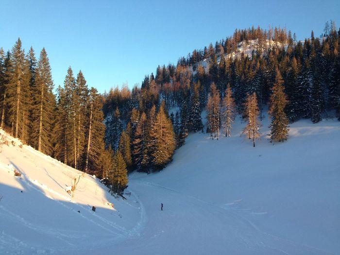 Snow Wintertime Ausseerland Track Sunhine Trees Pine Pinetrees Outdoor Activity