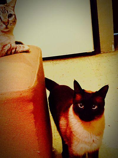 Cute Cats Lovecats Kittens EyeEm Cats mis bebes miamu😻😻😽😽😽🐈🐈🐈