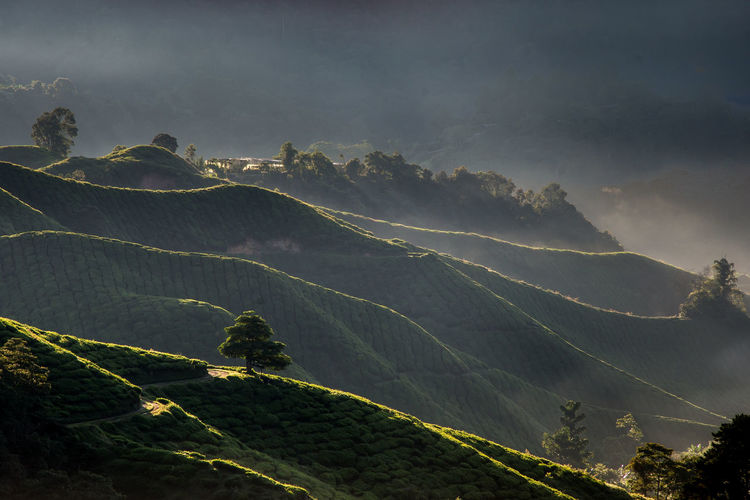 Scenic View Of Tea Plantations On Mountains