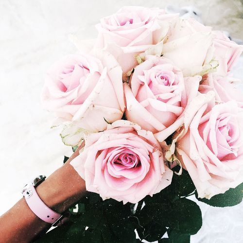 Bride bouquet Flower Rose - Flower Pink Color Bouquet Human Hand Real People Bride Wedding