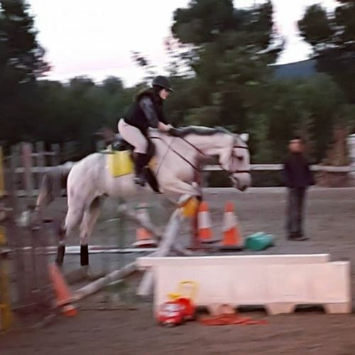 Littlejump Horsegirl Loveyou Horsefollowers Horserider Equine Dressagerider Tagsforlikes Horsestagram Hipica Tarantino