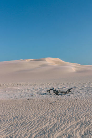 Exploring the beautiful dunes of Lencois Maranhenses. Arid Climate Beauty In Nature Blue Branch Clear Sky Day Desert Dry Horizon Over Land Landscape Minimalism Nature No People Outdoors Pattern Sand Sand Dune Scenics Sky Sun Tranquil Scene Tranquility Travel Travel Destinations Traveling The Great Outdoors - 2017 EyeEm Awards EyeEmNewHere Sommergefühle EyeEm Selects Lost In The Landscape This Is Latin America The Great Outdoors - 2018 EyeEm Awards A New Perspective On Life