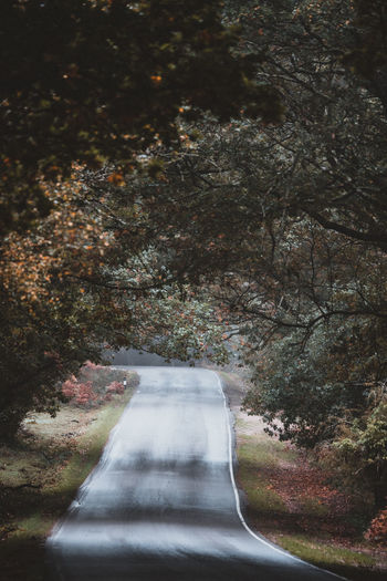 Autumnal Road Tree Plant Road Transportation Direction The Way Forward Nature No People Day Growth Outdoors Tranquility Beauty In Nature Autumn Empty Road Forest Tranquil Scene Scenics - Nature Land Non-urban Scene Change