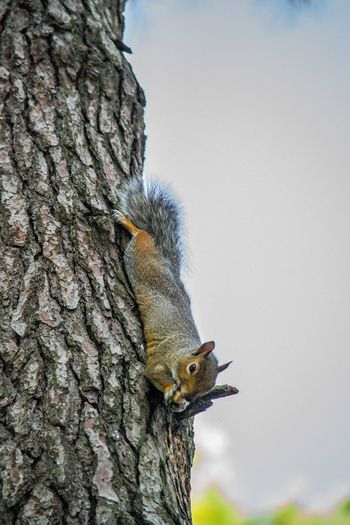Close-up of squirrel perching on tree against sky