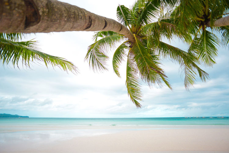 Tropical Climate Tree Palm Tree Beach Sea Land Sky Beauty In Nature Tranquility Tranquil Scene Scenics - Nature Horizon Over Water Plant Horizon Nature Cloud - Sky No People Coconut Palm Tree Outdoors Tropical Tree Palm Leaf #Island Boracay Philippines
